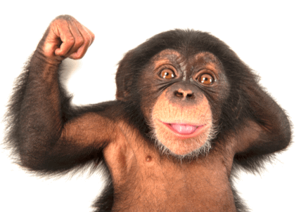 Business chimp or business champ